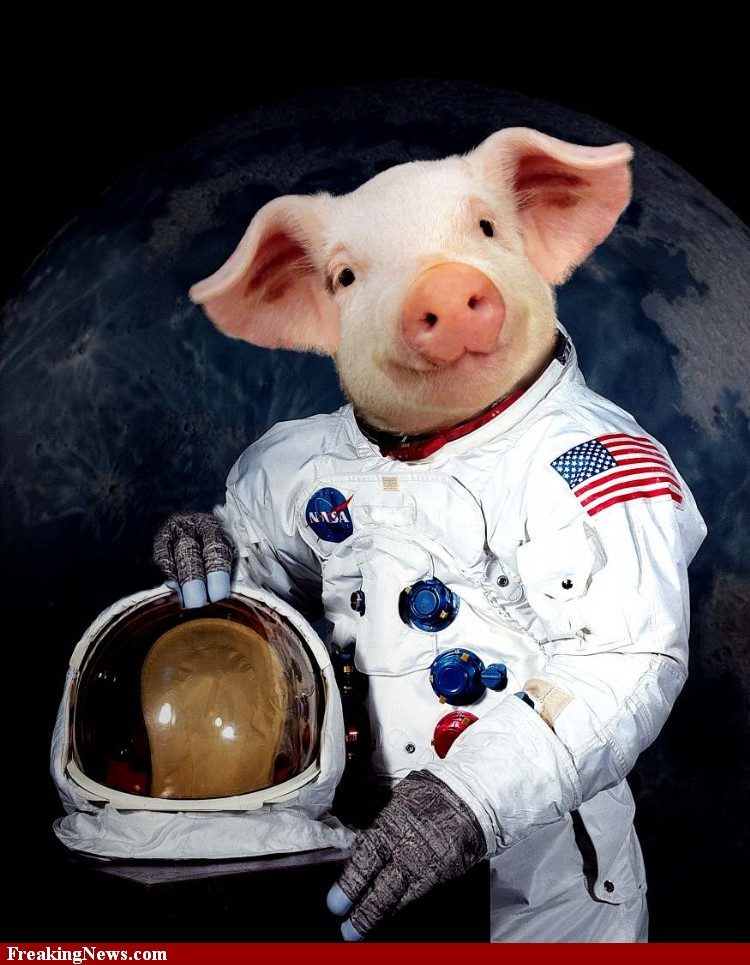 Animal Astronaut - Pics about space