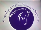 Amethyst Performance Horses Summer Camp