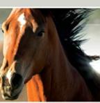 Sandi Trails Horseback Riding Summer Camp